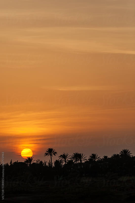 Palm Trees Silhouettes on a Tropical Sunset by VICTOR TORRES for Stocksy United