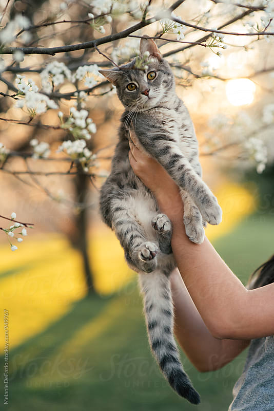 Girl and kitty by Melanie DeFazio for Stocksy United