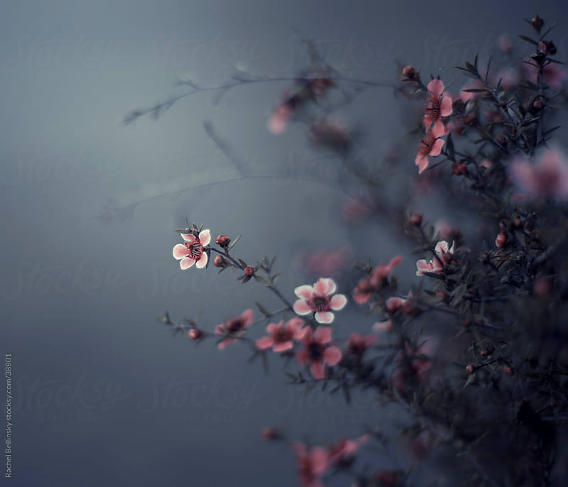 Small pink blooms on branches against a grey background by Rachel Bellinsky for Stocksy United