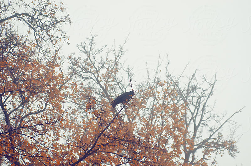 Autumn fog ,trees,branches and birds by Marija Anicic for Stocksy United