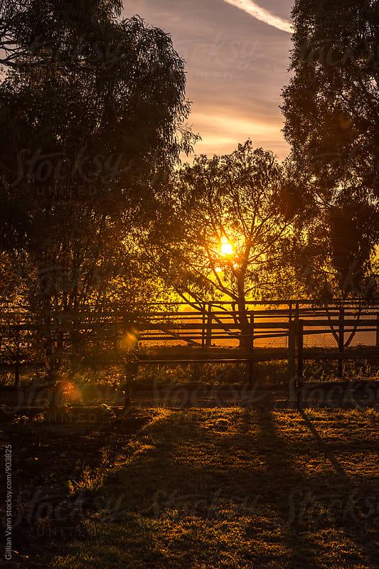 sunrise shining through the trees on a farm by Gillian Vann for Stocksy United