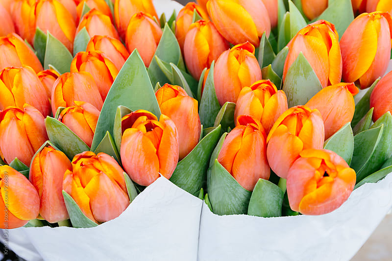 Bouquets of tulips by Kristin Duvall for Stocksy United