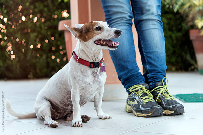 Little Jack Russell Terrier dog and owner by Luca Pierro for Stocksy United