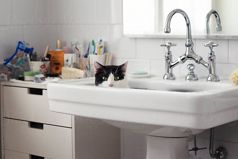 Cat peeping out from washbasin and looking straight at the camera by Laura Stolfi for Stocksy United