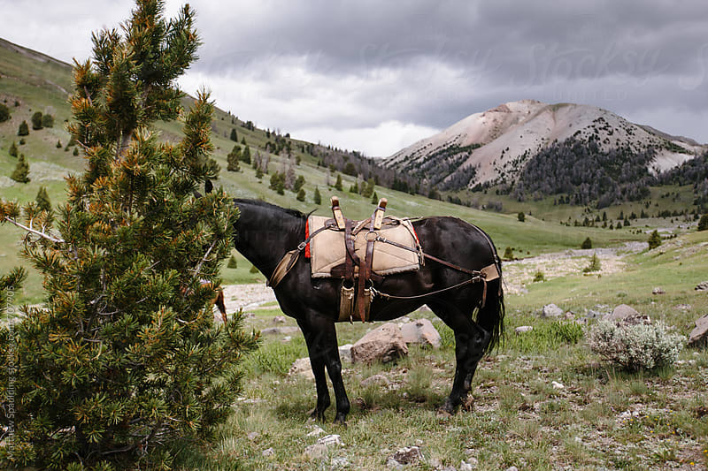 Hiding horse with pack tied to tree by Matthew Spaulding for Stocksy United