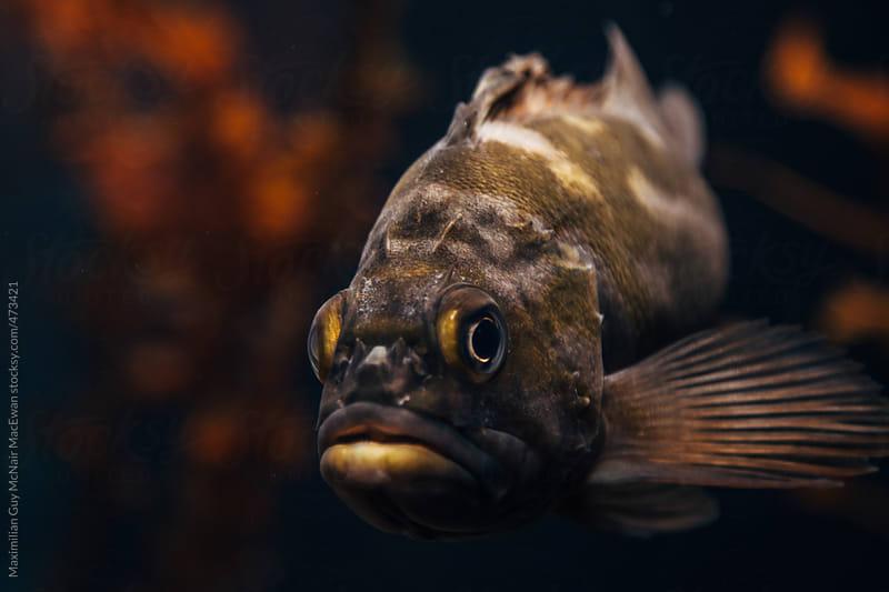 Aquatic Life by Maximilian Guy McNair MacEwan for Stocksy United
