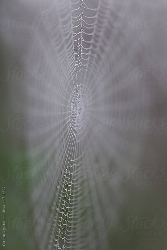 Large spider web with dew by Carolyn Lagattuta for Stocksy United