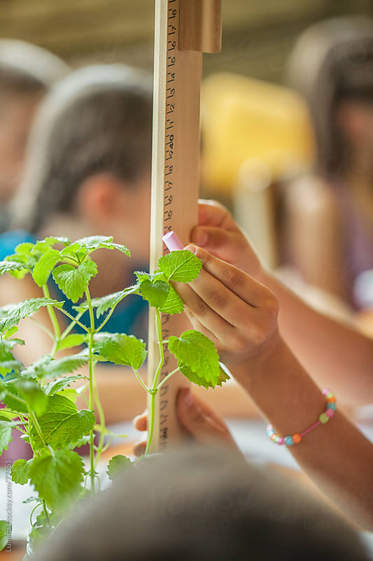 Girl Measuring Plants in a Botany Lesson by Lumina for Stocksy United