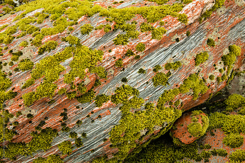 Closeup of Moss Growing on Rock by Odyssey Stock for Stocksy United