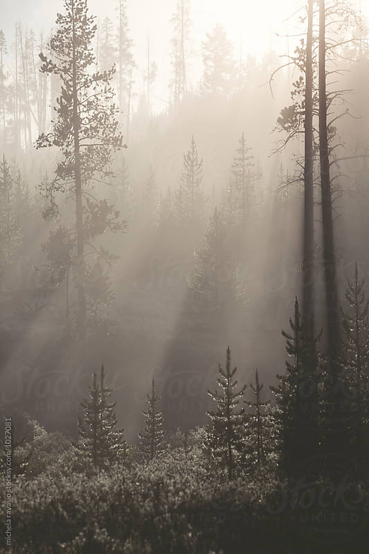 the sunrays filtering in the forest by michela ravasio for Stocksy United