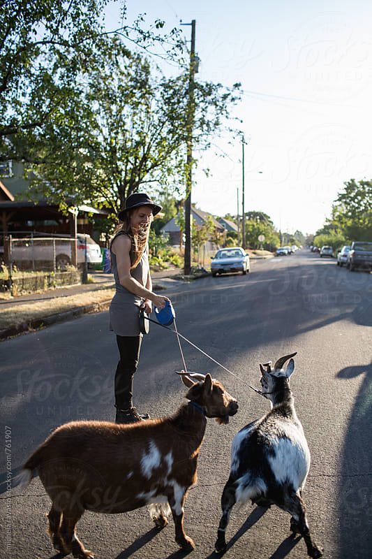 Two goats on a leash playing in the street by michela ravasio for Stocksy United