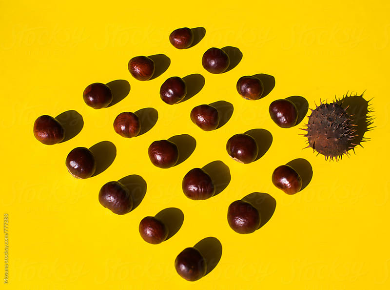 Chestnuts as a Background by Mosuno for Stocksy United