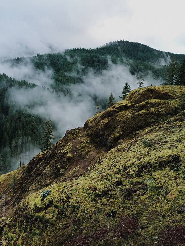 Trail Around Foggy Canyon by Kevin Russ for Stocksy United