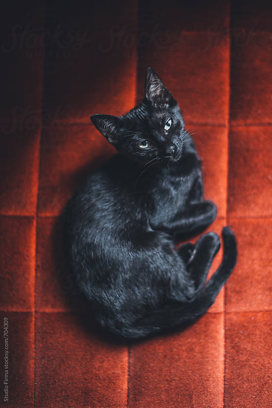 Black little kitten looking at the camera. by Studio Firma for Stocksy United