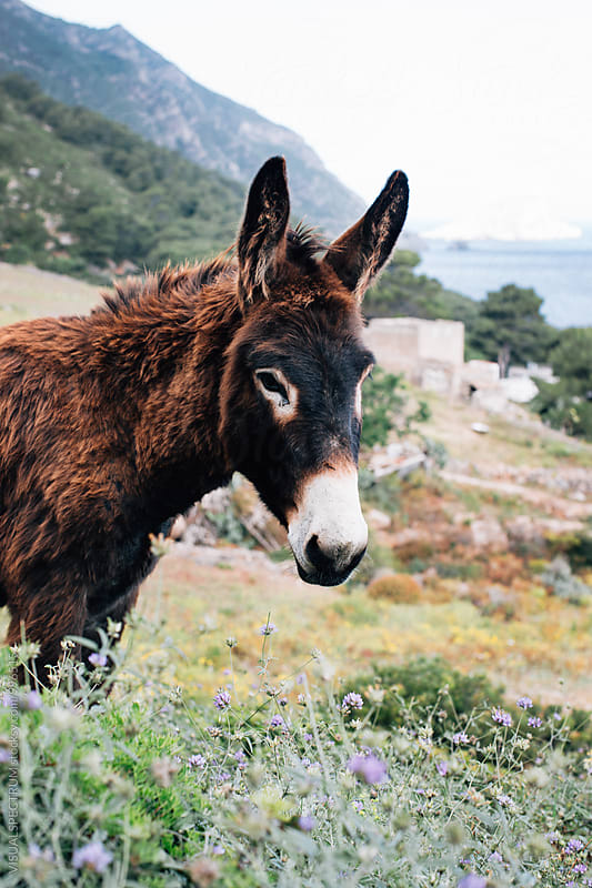 Donkey Portrait by Julien L. Balmer for Stocksy United