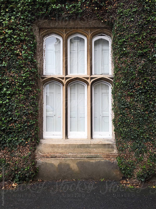 Large window with arched frames and closed wooden shutters. Ivy surround. by Paul Phillips for Stocksy United