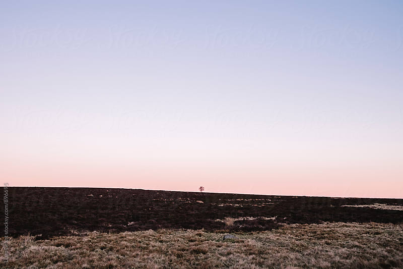 Lone tree on moorland at twilight. Derbyshire, UK. by Liam Grant for Stocksy United