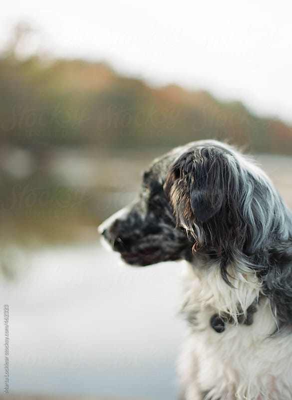Portrait of a dog at the river by Marta Locklear for Stocksy United