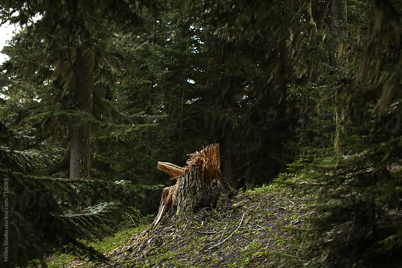 Wild forest by Milles Studio for Stocksy United