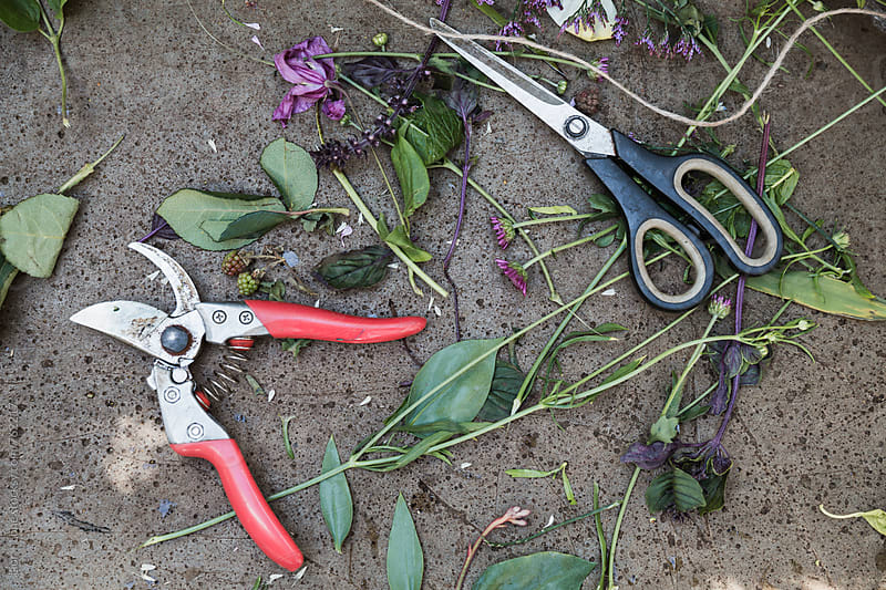 Scissors, garden cutters and flower trimmings on a stone surface by Lior + Lone for Stocksy United