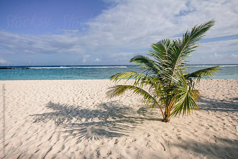 Palm tree on beach of tropical island by Alejandro Moreno de Carlos for Stocksy United
