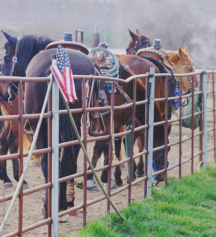 Saddled horses standing along an arena fence in rural country setting. by Tana Teel for Stocksy United