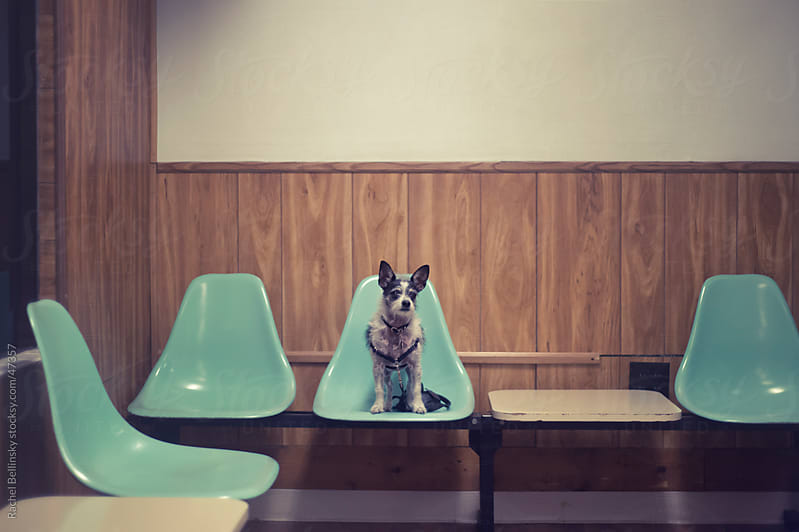 Small dog on a green plastic chair in an old laundromat waiting area by Rachel Bellinsky for Stocksy United