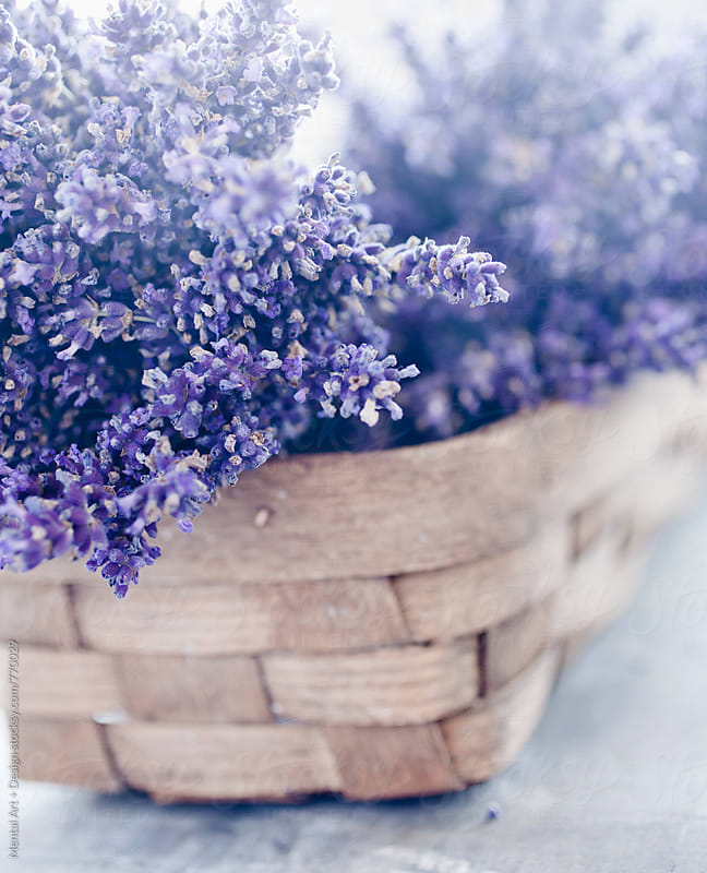 Lavender by Mental Art + Design for Stocksy United