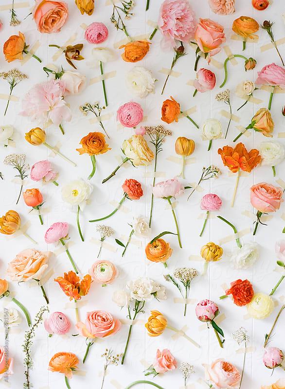 Flower backdrop by Ali Harper for Stocksy United