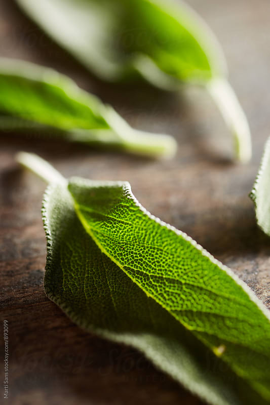 Macro of fresh sage leaf by Martí Sans for Stocksy United