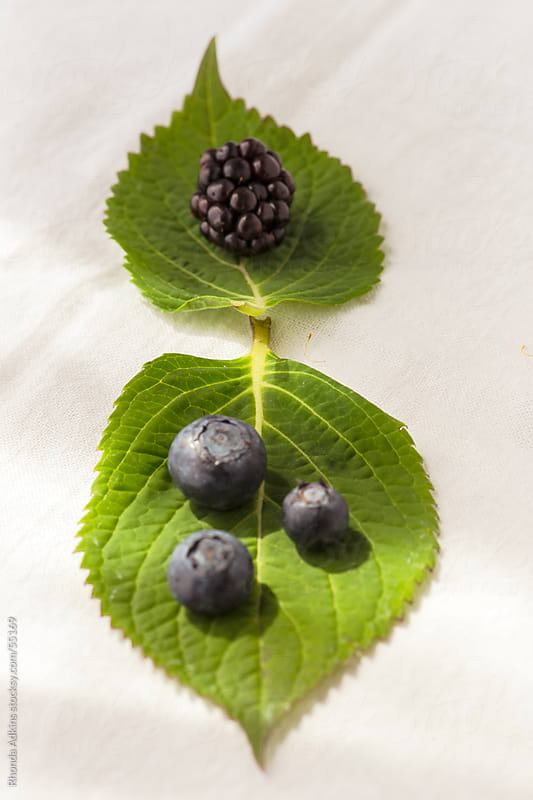 Blueberries and a blackberry on two leaves. by Rhonda Adkins for Stocksy United