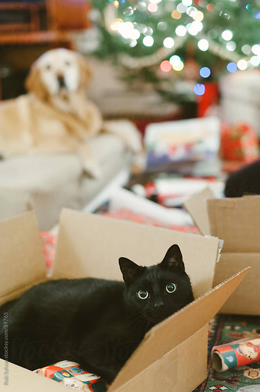 Cat in Christmas Wrapping by Rob Sylvan for Stocksy United