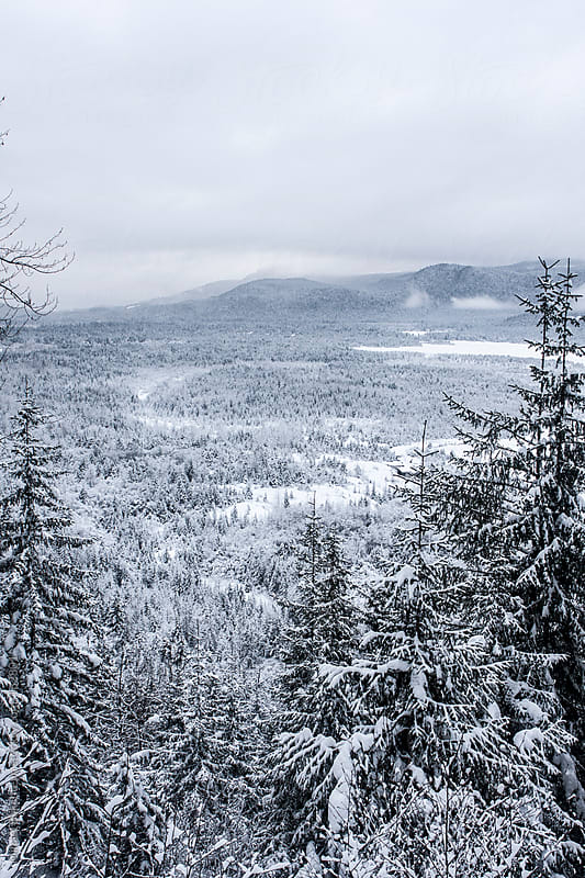 Aerial view of snow-covered forest in a valley by Mihael Blikshteyn for Stocksy United