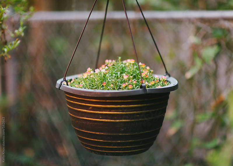 flowers in a hanging pot by Kelly Knox for Stocksy United