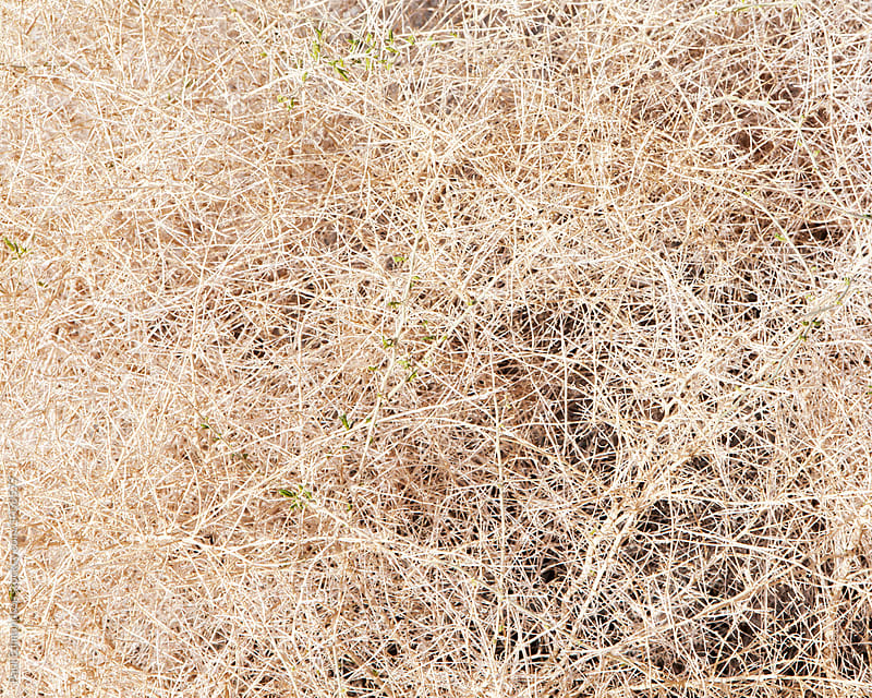 Close up of tumbleweed, Joshua Tree NP, CA by Paul Edmondson for Stocksy United