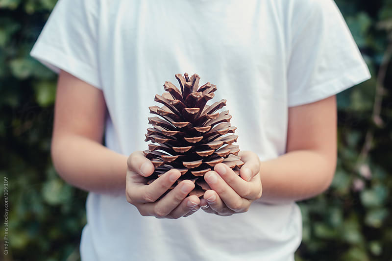 Two hands holding a big pinecone by Cindy Prins for Stocksy United