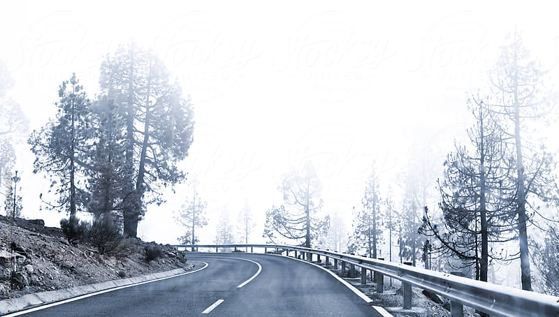 Winter Foggy Winding Road by Victor Torres for Stocksy United