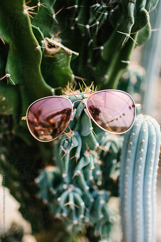 Sunglasses on a cactus  by Kristen Curette Hines for Stocksy United