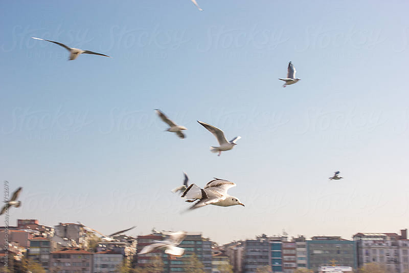 Seagulls flying above Bosphorus  by Milles Studio for Stocksy United