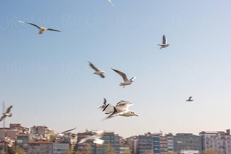 Seagulls flying above Bosphorus  by Milles Studio for Stocksy United