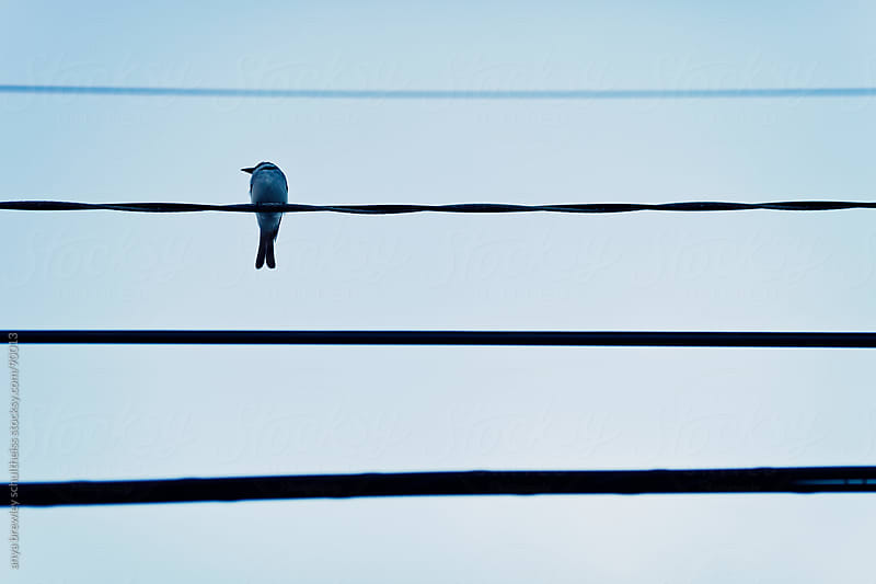 Minimal image of a bird sitting on a power line by anya brewley schultheiss for Stocksy United