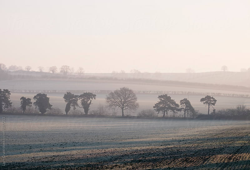 Trees and sunlight on a frost covered field at sunrise. Norfolk, UK. by Liam Grant for Stocksy United