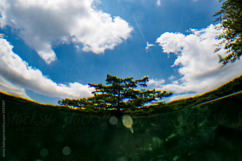 Photo of a tree from underwater by Jenny Sathngam for Stocksy United