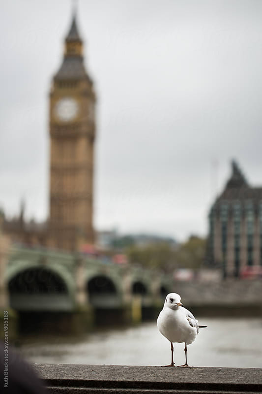 Seagull in front of Big Ben, London by Ruth Black for Stocksy United