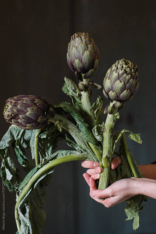 Hands holding bunch of artichokes by Alberto Bogo for Stocksy United