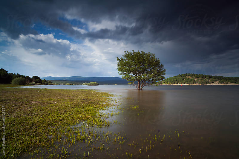 lonely tree in the middle of the water with storm approaching by Javier Pardina for Stocksy United