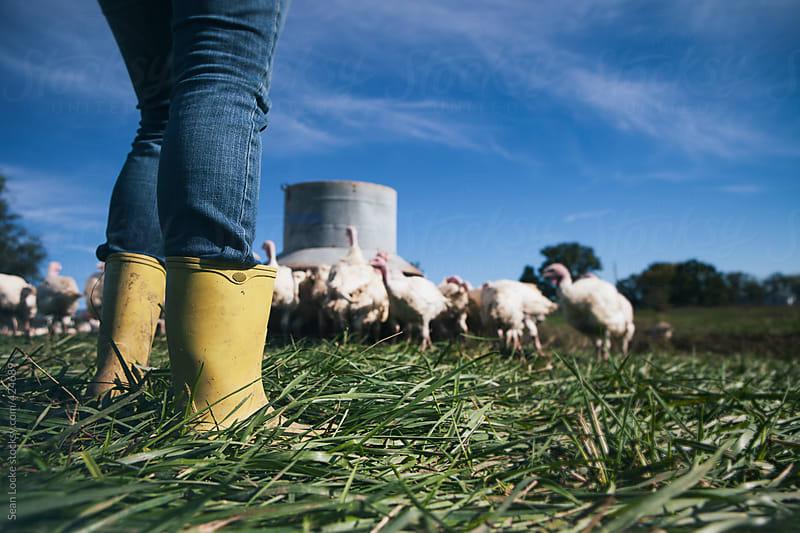 Farm: Female Farmer Watches Flock Of Turkeys by Sean Locke for Stocksy United