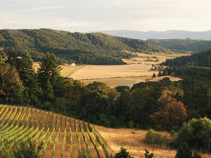 Oregon Vineyards by B. Harvey for Stocksy United