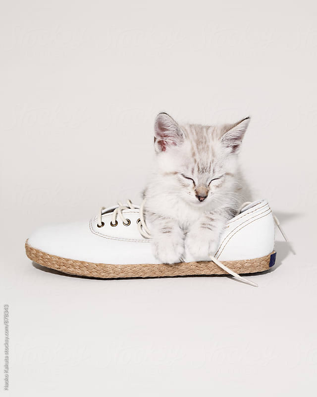 sleeping cat on a white shoe by Naoko Kakuta for Stocksy United