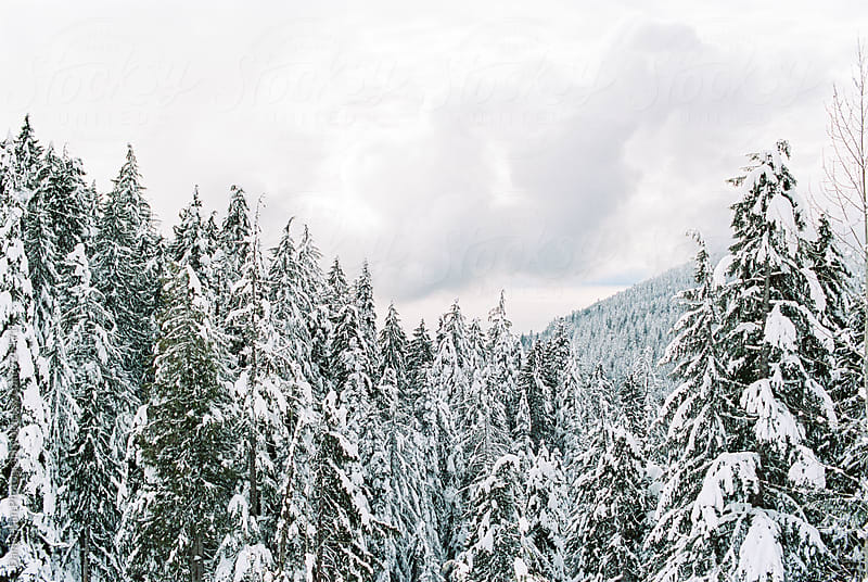 Snowy forest landscape by Daniel Kim Photography for Stocksy United